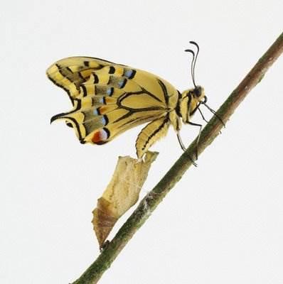 mariposa-oruga
