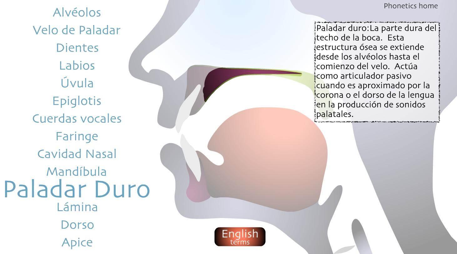 articulación anatómica
